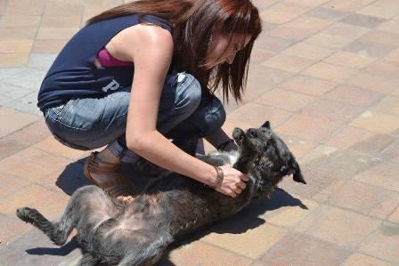 """Priscilla Pizarro, dirigente animalista de Iquique Glorioso: """"reglamento para tenencia de mascotas es una burrada"""""""