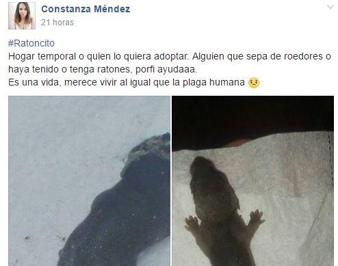 Solicitud de iquiqueña para buscar hogar a ratoncito origina polémica en redes sociales