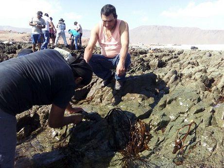CNG junto a Sindicato N°1 de Pescadores y buzos de Caleta Chanavayita, iniciaron proyecto de repoblamiento de Huiro Negro (Lessonia berteroana) en Chanavayita.